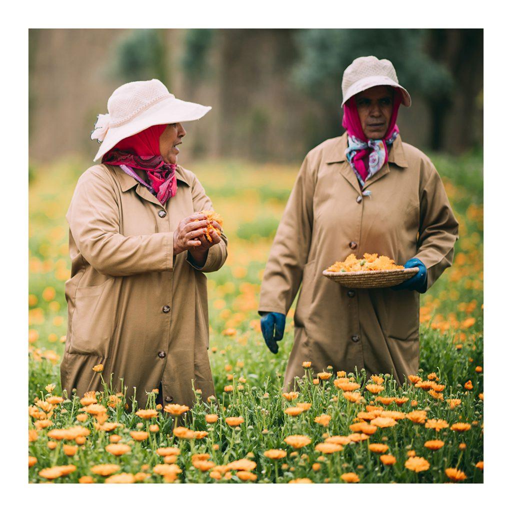 Yves Saint Laurent-Hai cô gái hái hoa.
