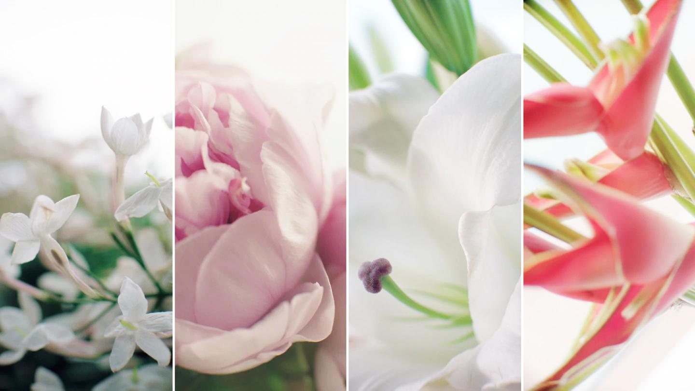 4 loài hoa