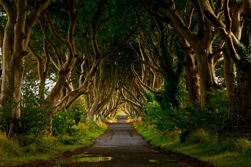con đường huyền bí ở bregagh
