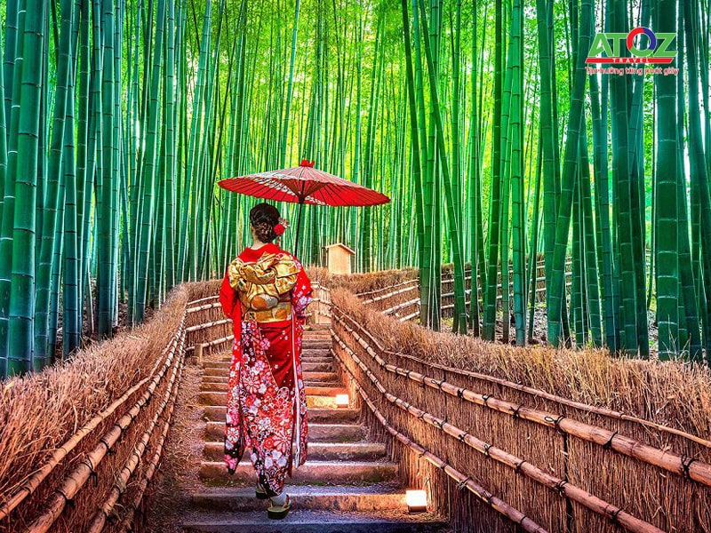 hàng tre xanh rì ở kyoto