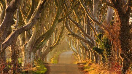 Chiêm ngưỡng vẻ đẹp của 30 con đường độc đáo trên thế giới