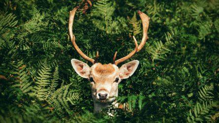 Loài động vật nào là thần thú đại diện cho ngày sinh của bạn?