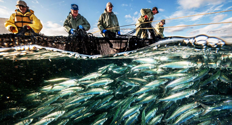 ngư dân đánh bắt cá đại dương