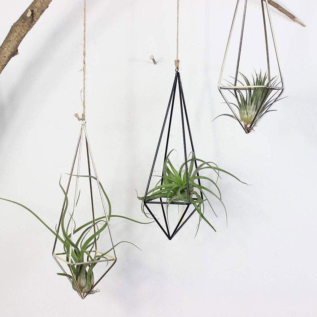 cây không khí phù hợp với cung bảo bình