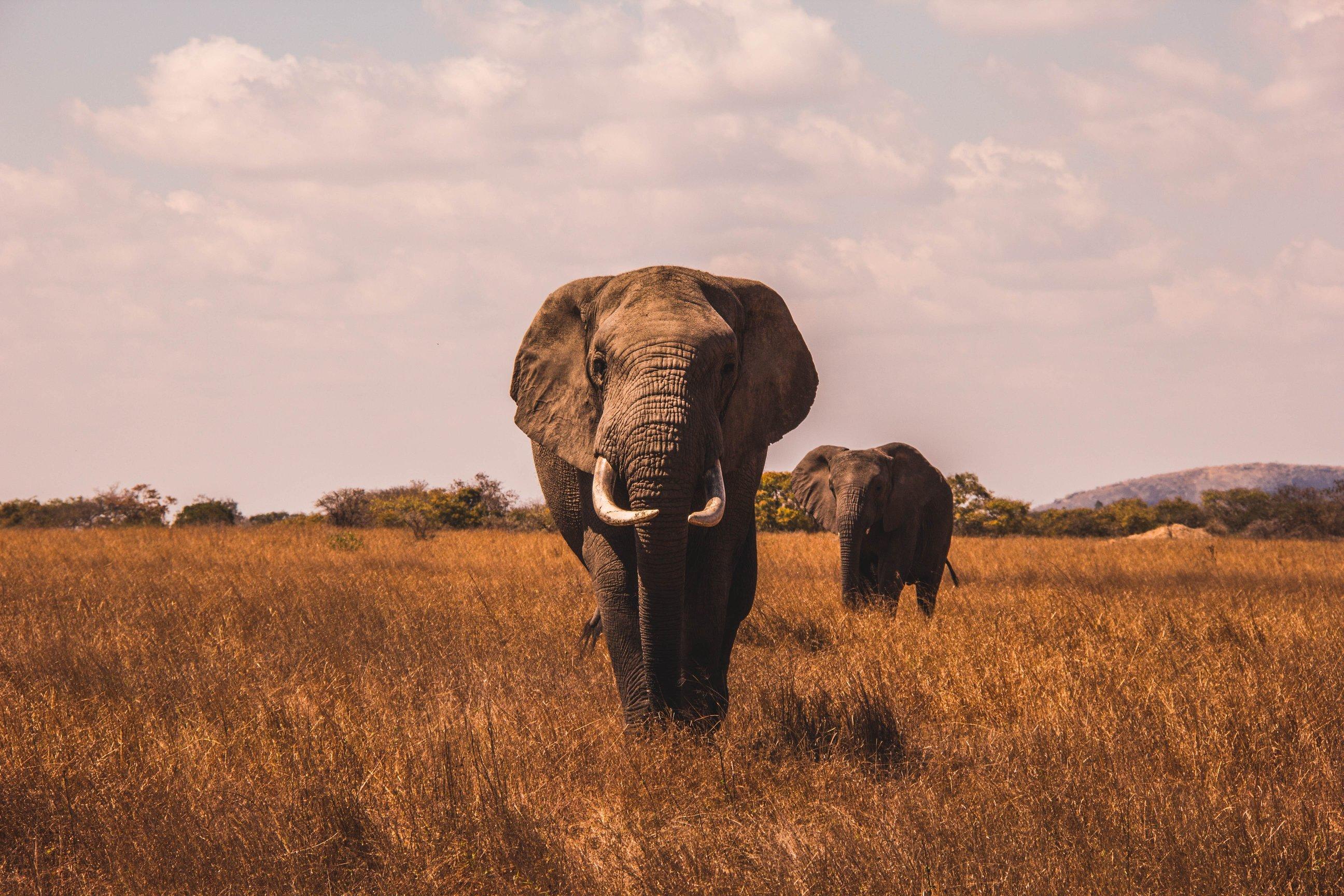 trắc nghiệm hình ảnh con voi