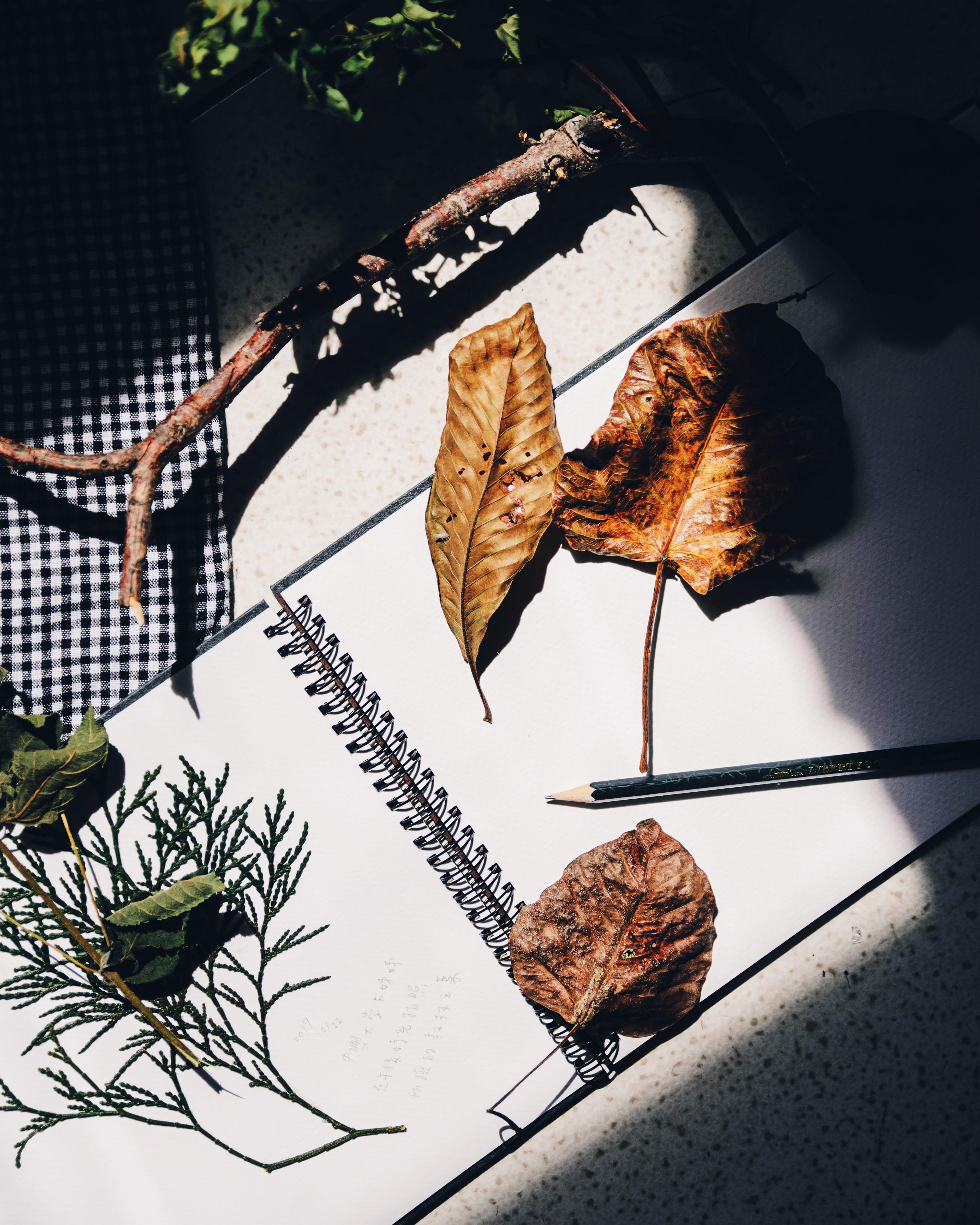 cung hoàng đạo cuốn sổ lá khô