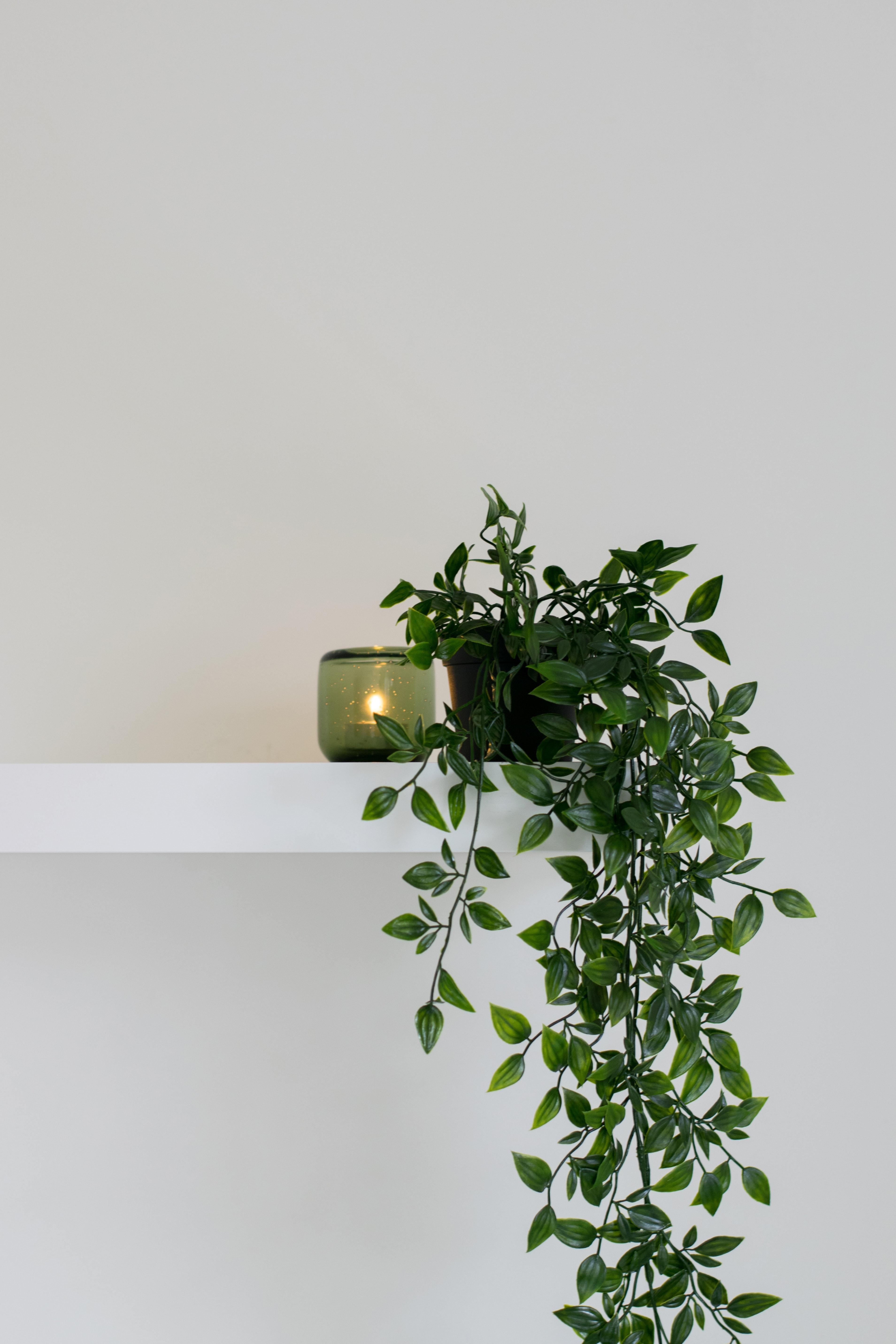 trang trí tường bằng cây xanh khi cách ly tại nhà