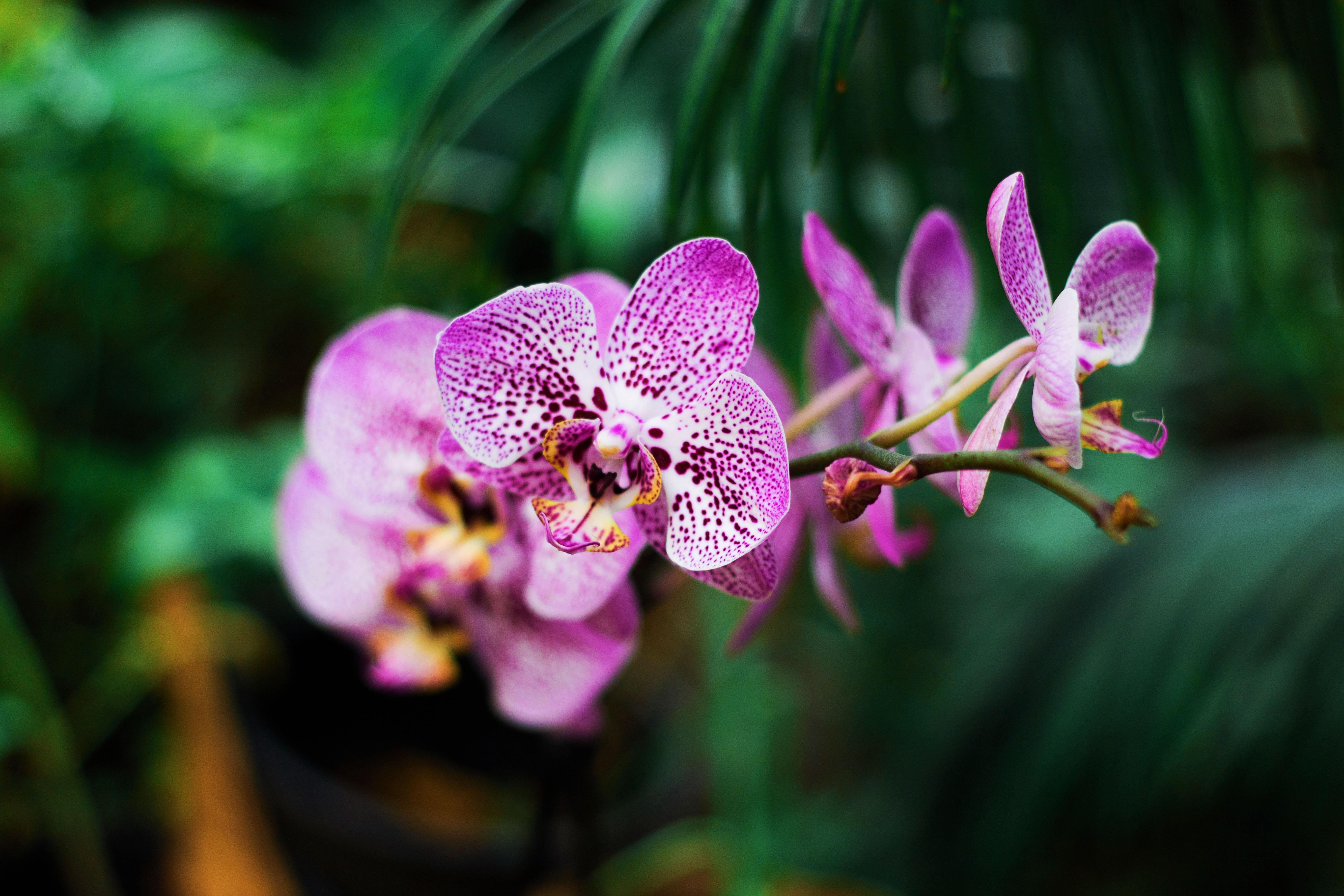 trắc nghiệm loài hoa hoa lan