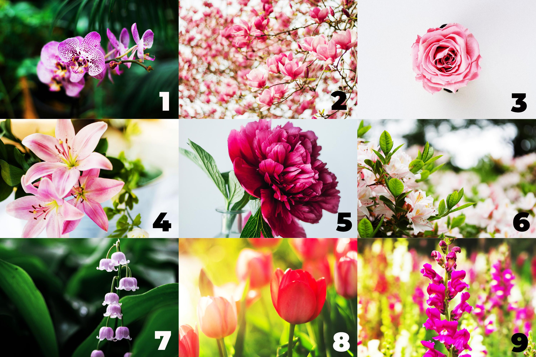 trắc nghiệm loài hoa yêu thích tiết lộ tính cách