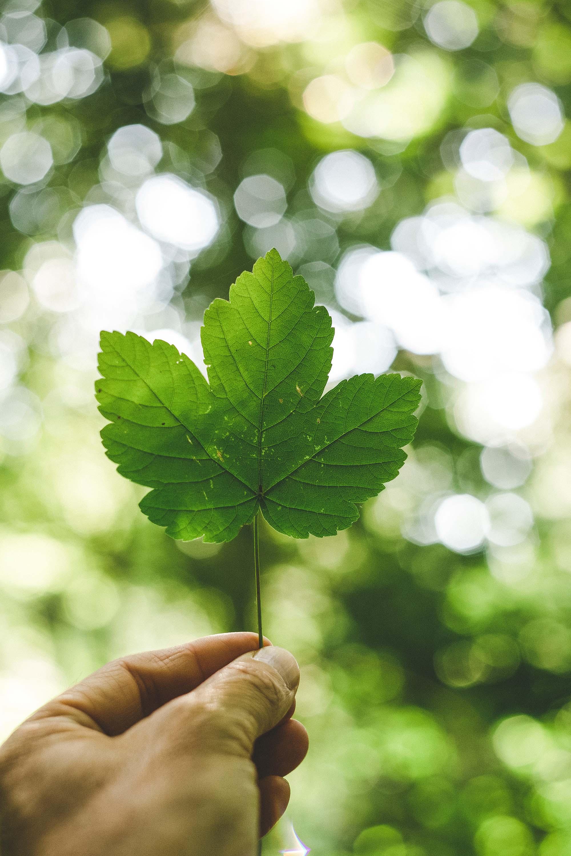 trắc nghiệm tín đồ sống xanh