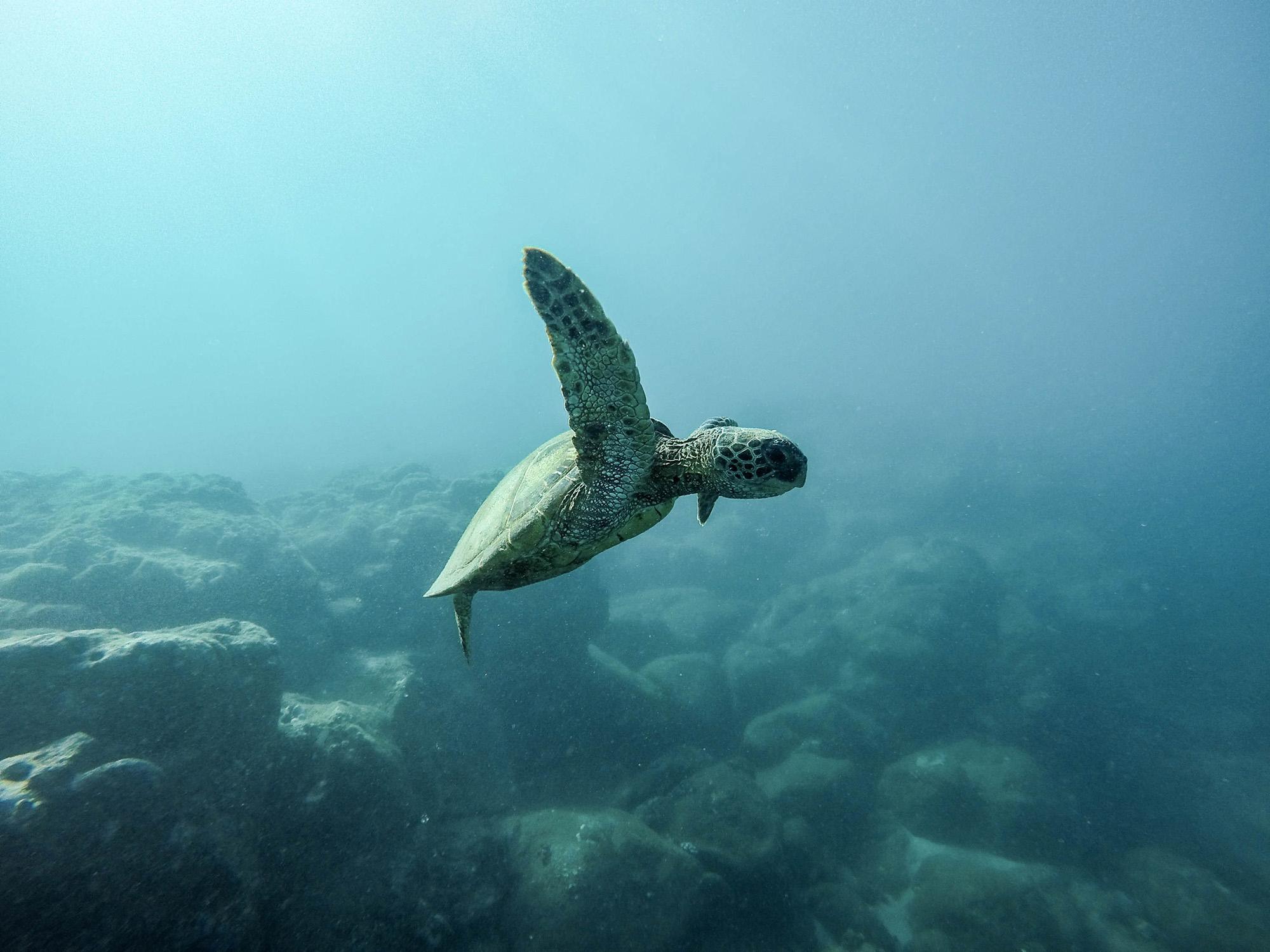 đại dương động vật biển