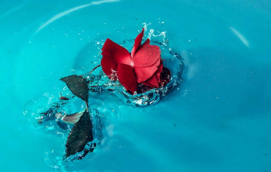 Nước hoa hồng trị nứt nẻ và khô ráp ở gót chân.