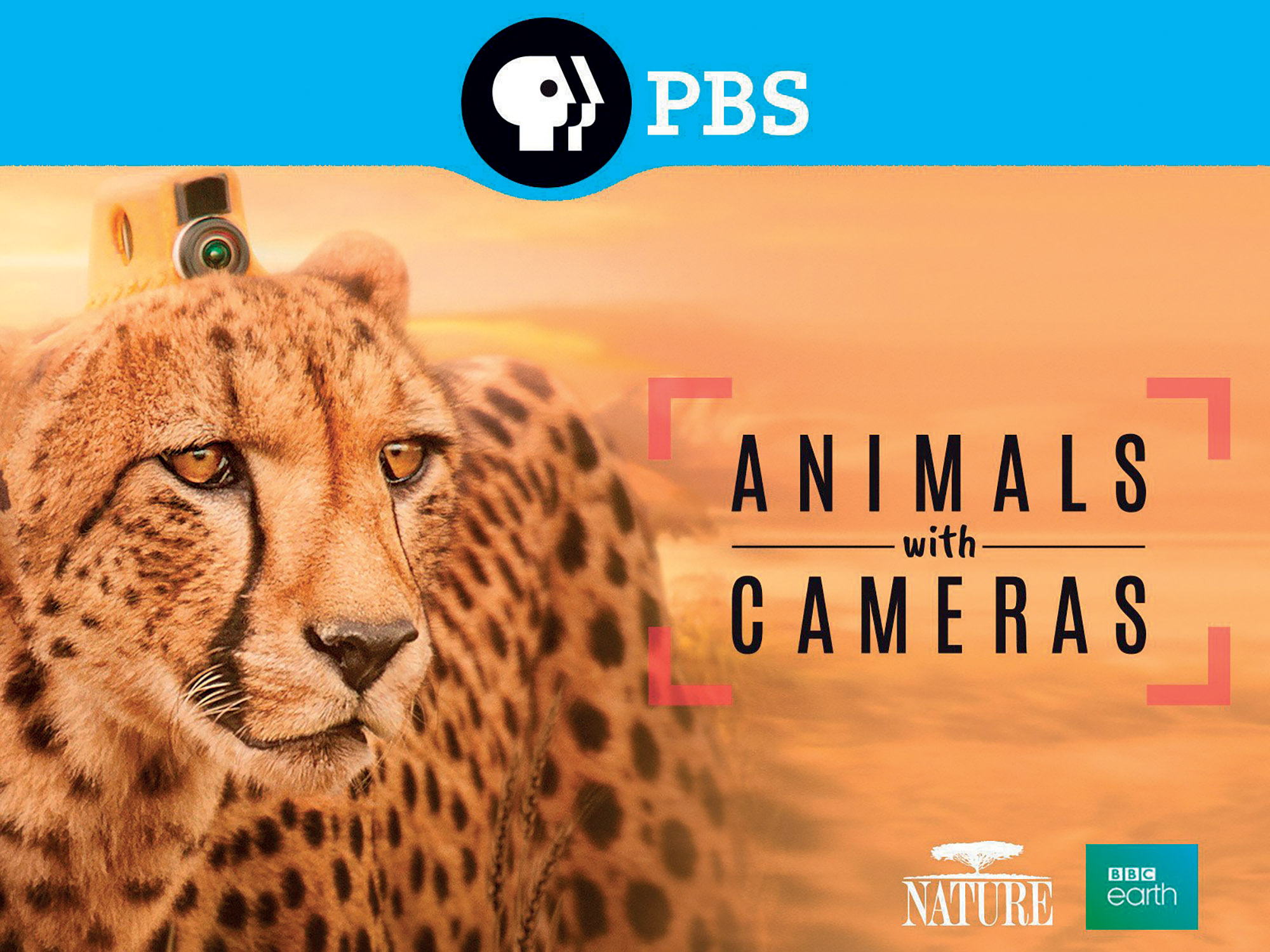 poster Animals with camera