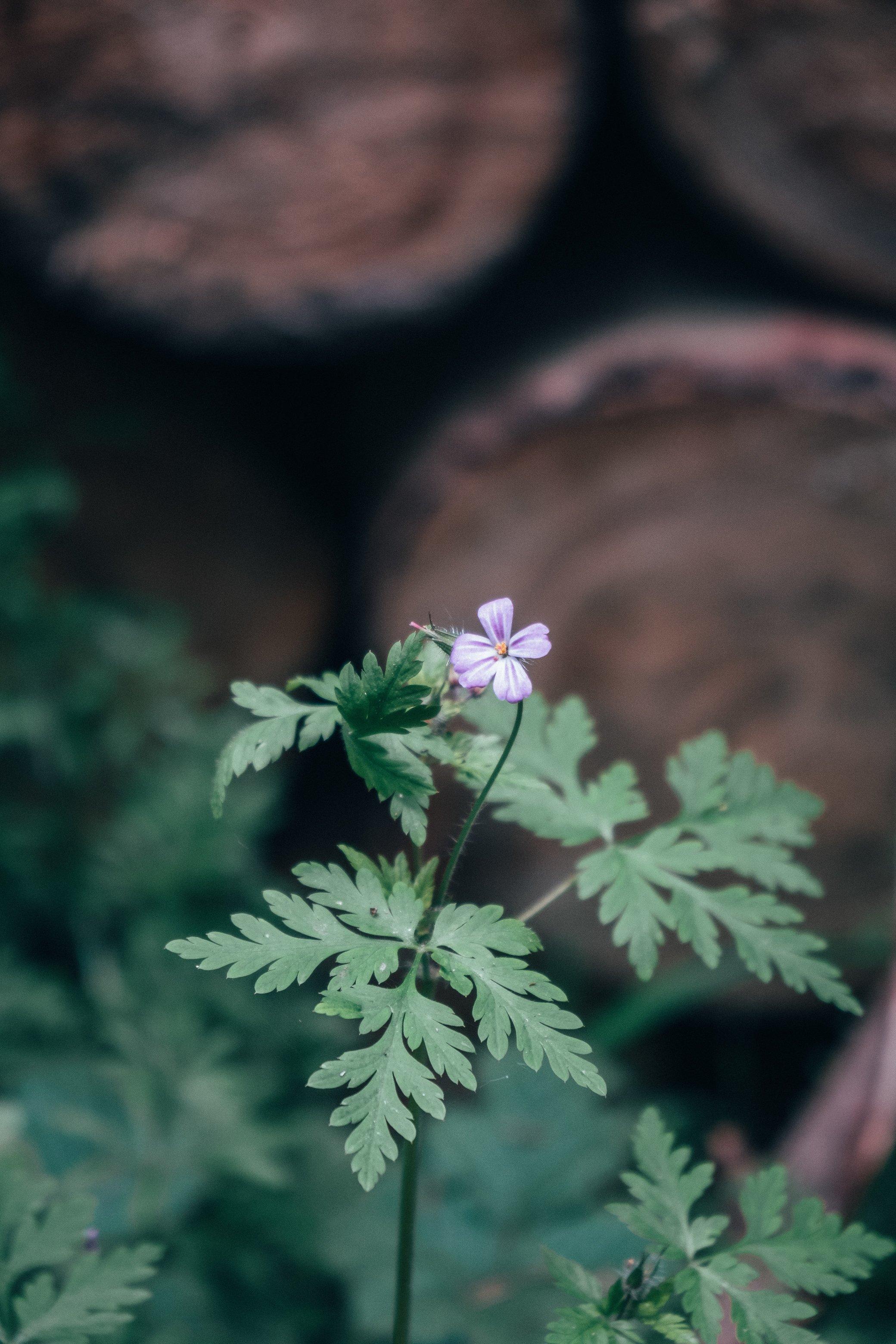 câu nói hay về sự bình tĩnh và bông hoa tím