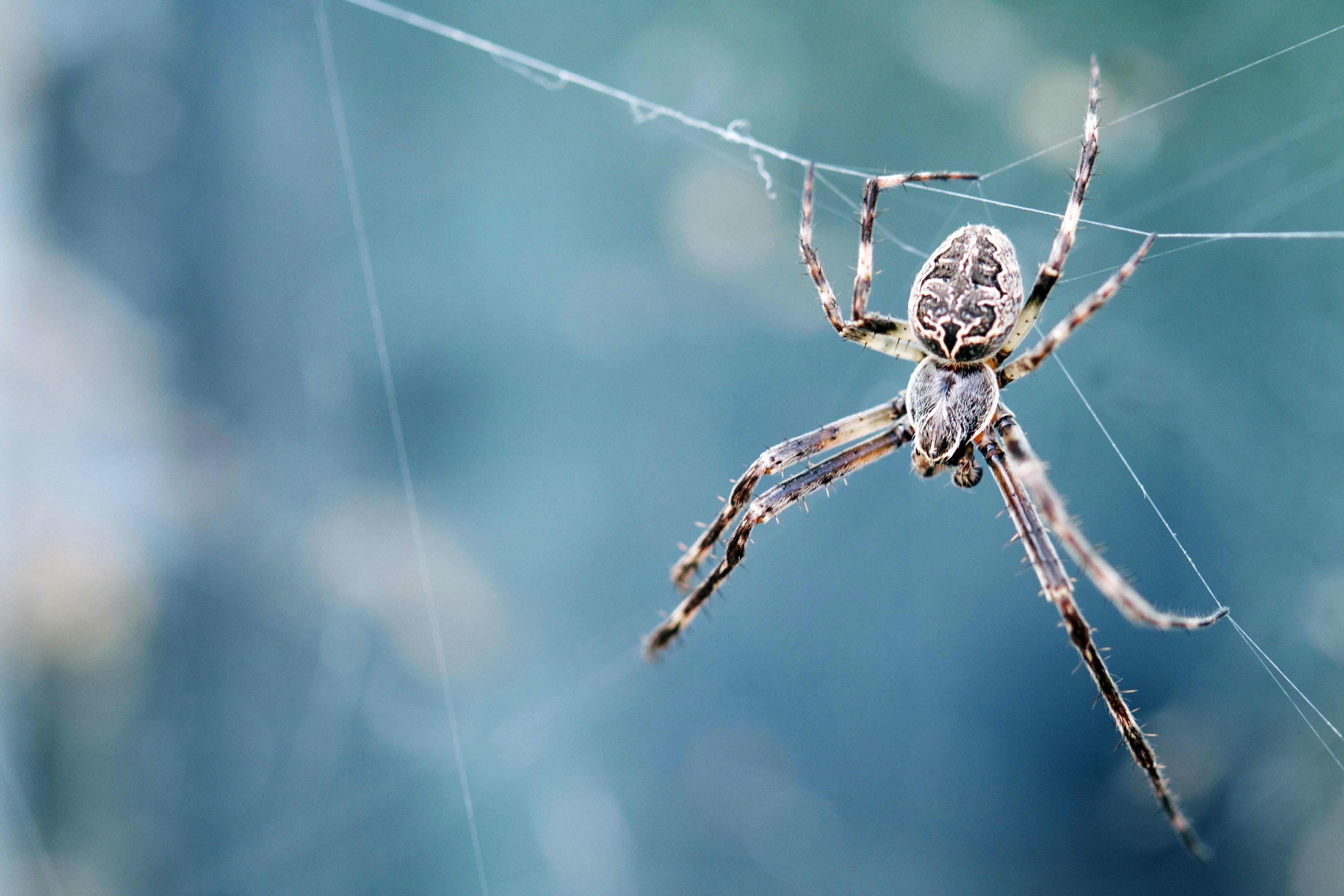 trắc nghiệm hình ảnh con nhện