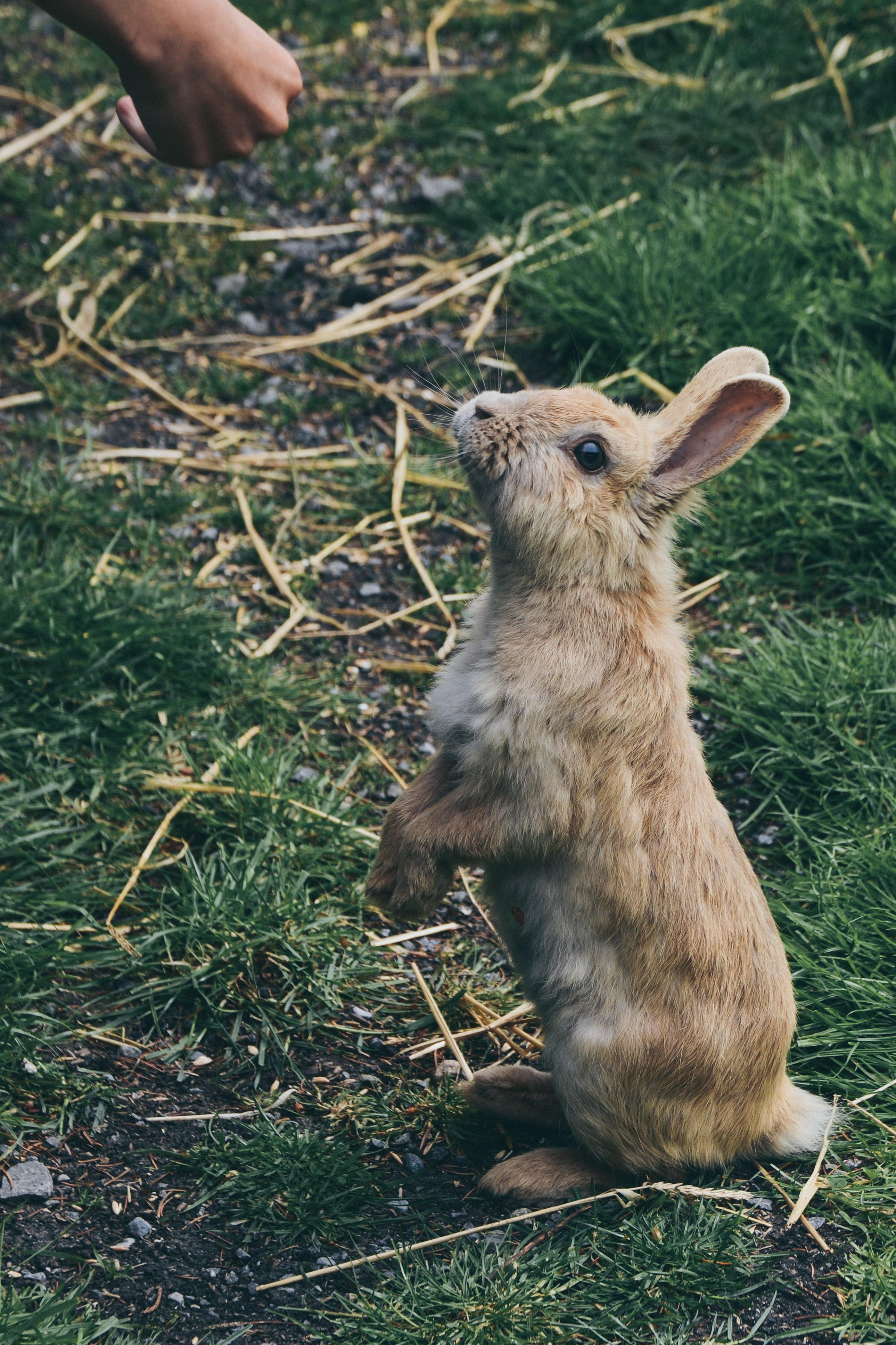 trắc nghiệm hình ảnh con thỏ