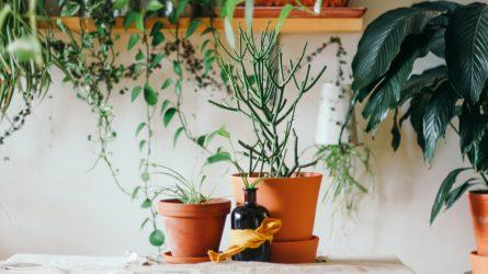20 cách giúp không gian nhà ở thân thiện hơn với môi trường