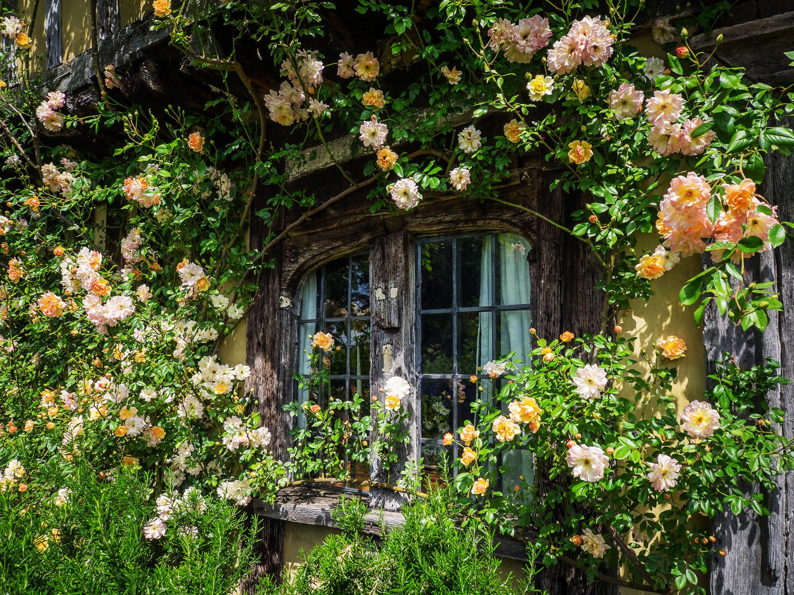 trào lưu ngôi nhà hoa hồng