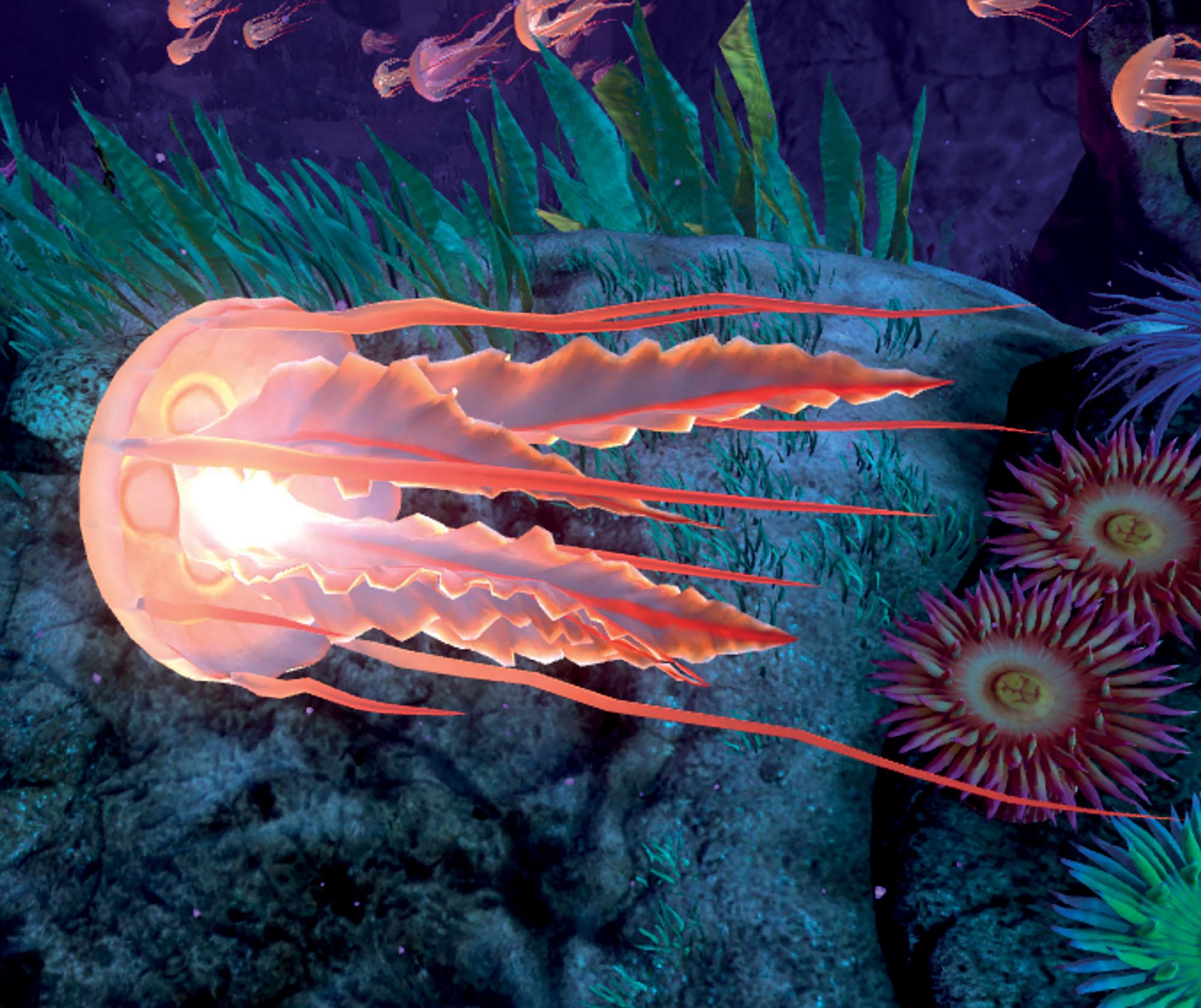 du lịch khám phá sứa biển