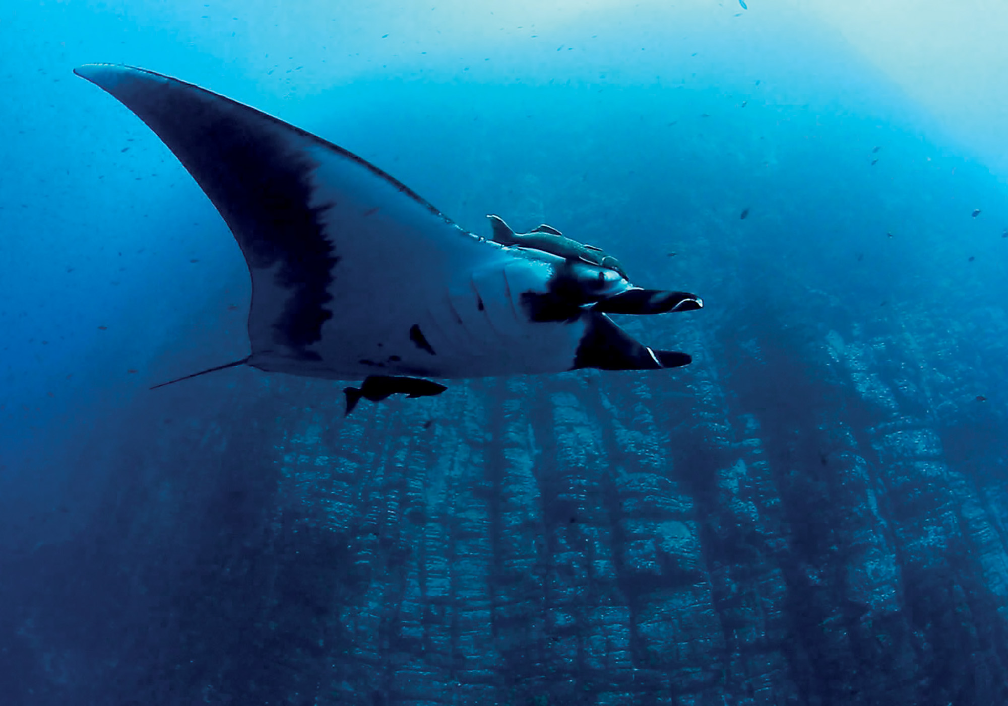 du lịch video 3D dưới môi trường biển