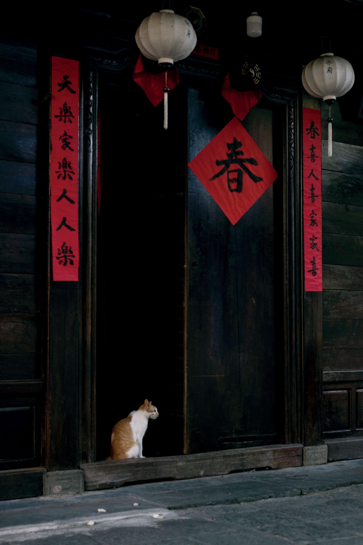 Hội An chú mèo tại cửa nhà dân