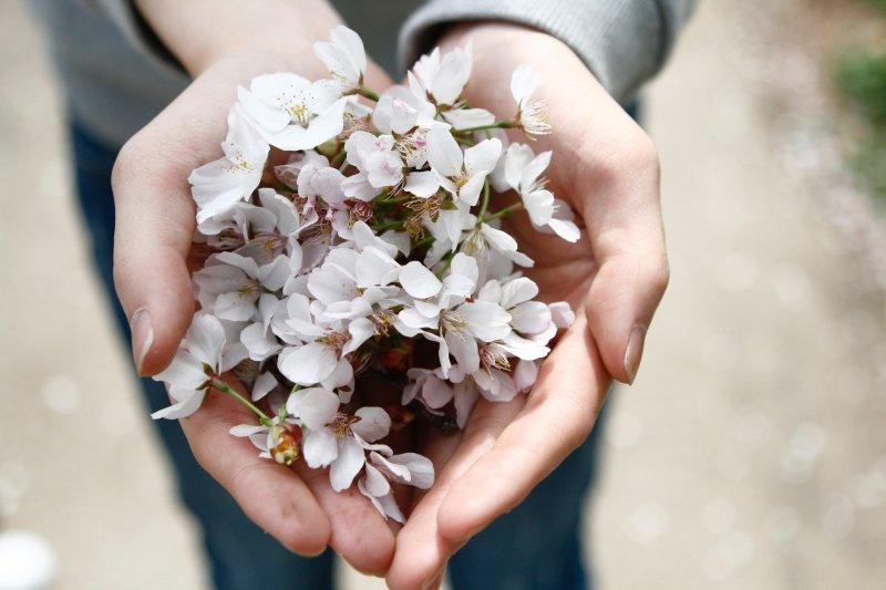 trắc nghiệm cô gái cầm hoa trắng