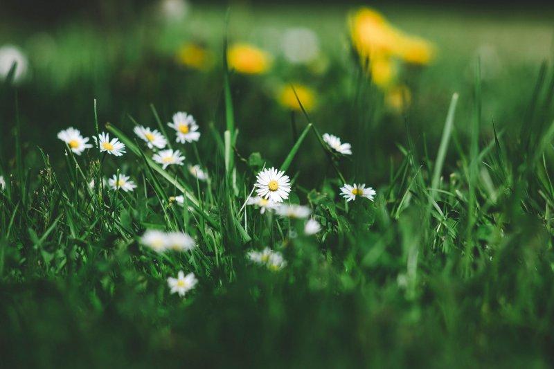 trắc nghiệm hoa cúc trên đồng cỏ