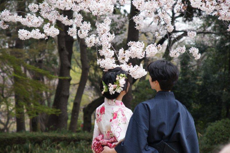 vô thường cặp đôi ngắm hoa anh đào