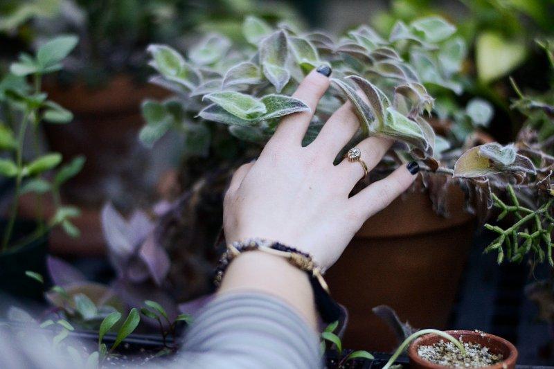 bàn tay chạm cây yêu thương bản thân