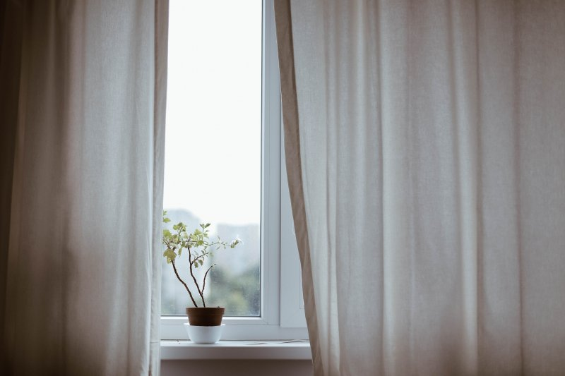 cây bên cửa sổ