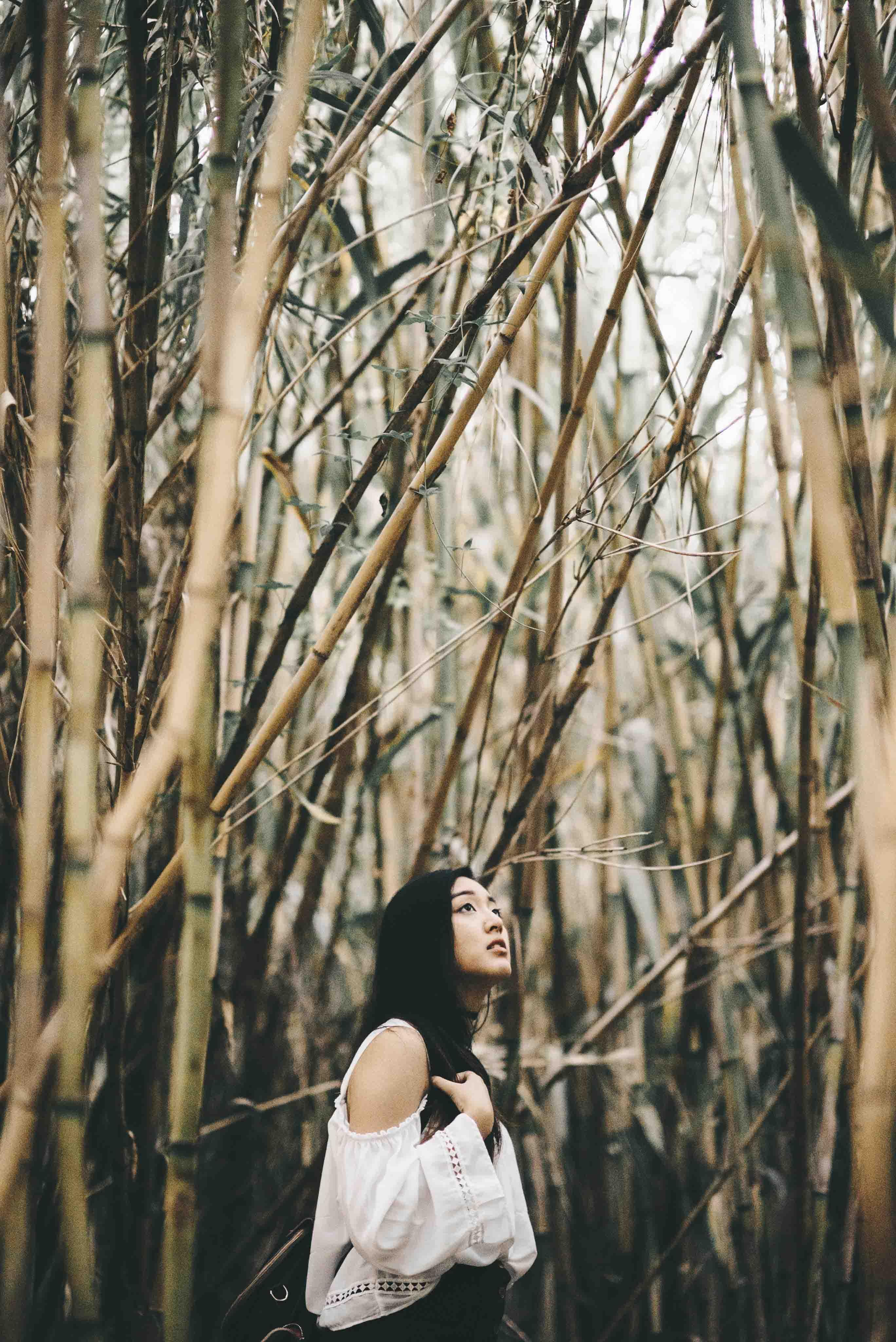 người hướng nội trong rừng tre