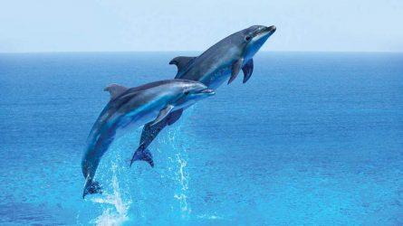 12 cung hoàng đạo mang tinh thần của loài sinh vật biển nào?