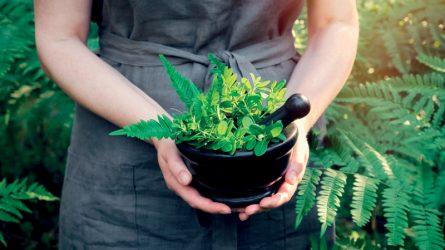 Ứng dụng liệu pháp chữa lành bằng thảo dược để sống khỏe mạnh và hạnh phúc hơn