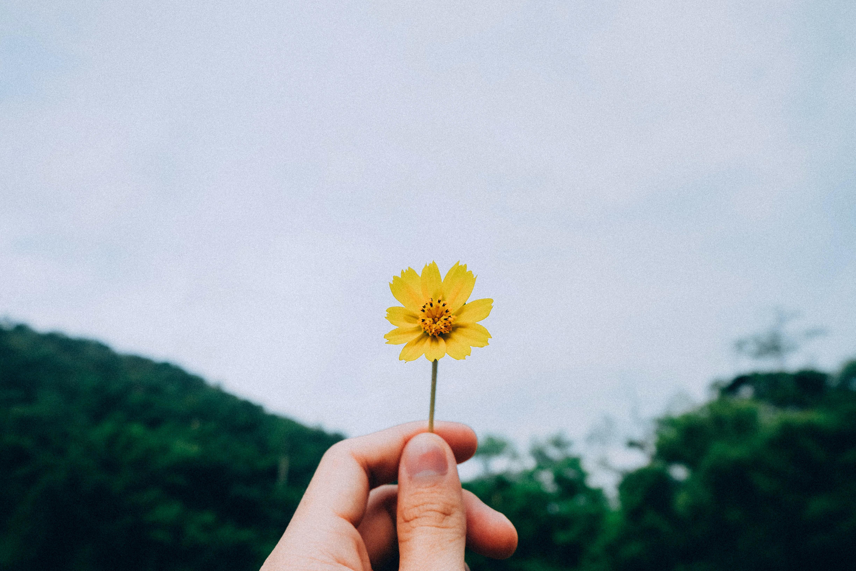 tuổi 30 bàn tay cầm bông hoa