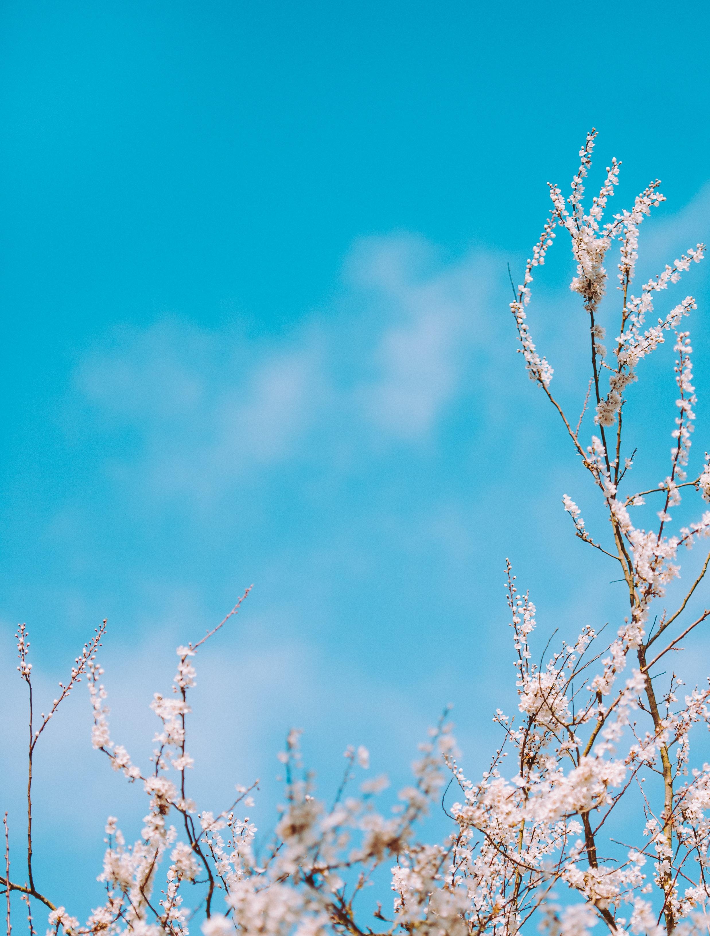 luân xa xanh dương