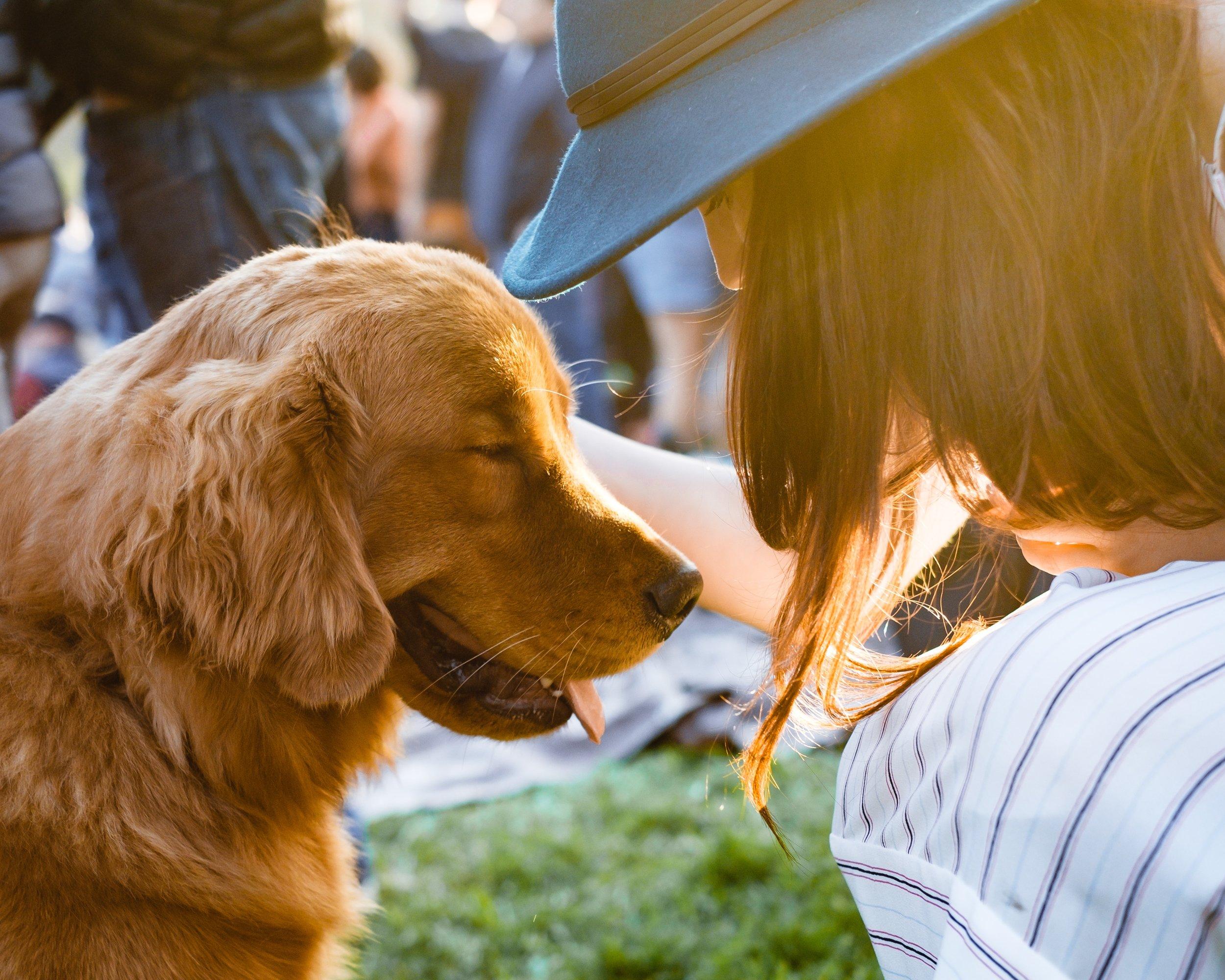 người yêu thú cưng cô gái và con chó