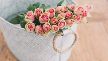 12 cung hoàng đạo là hiện thân của loài hoa nào?