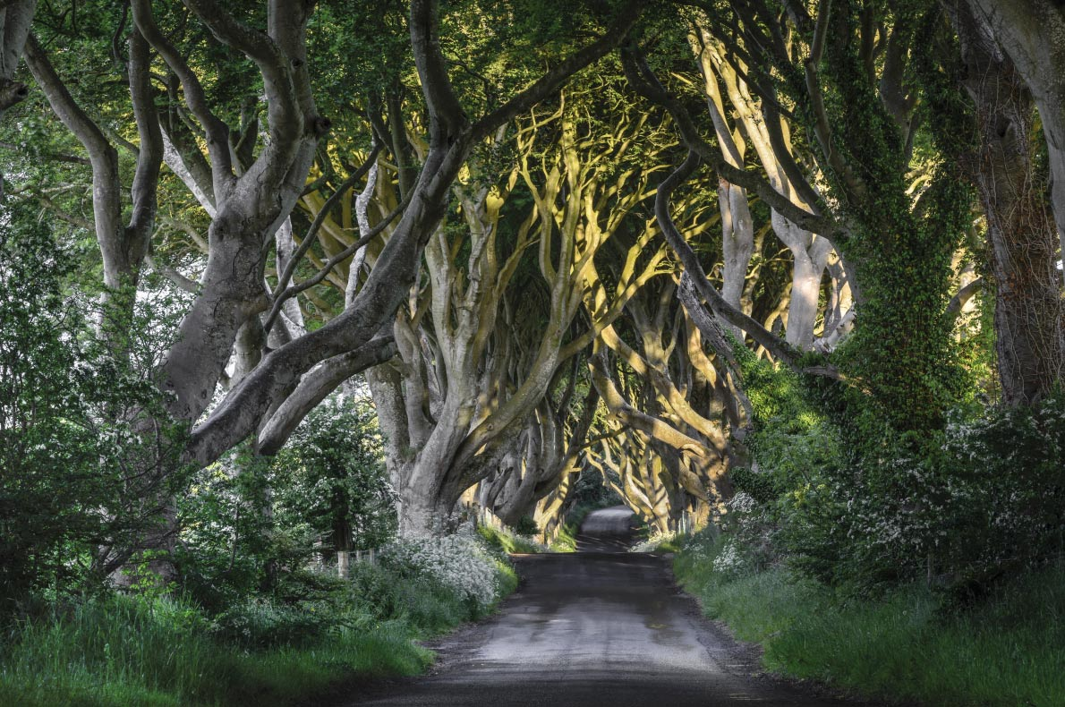 Dark Hedges - Ireland
