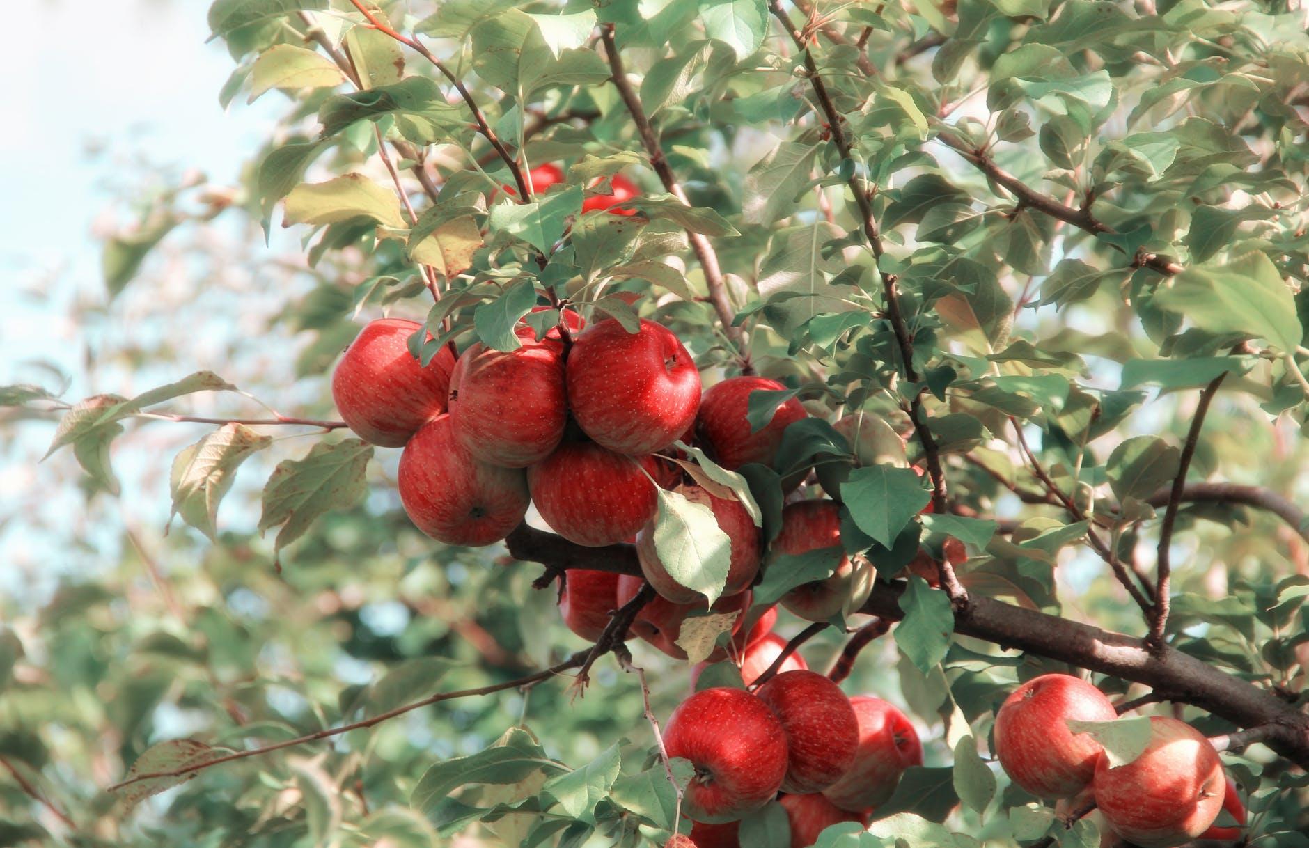Giấm táo là thực phẩm giúp cải thiện sức khỏe đường ruột