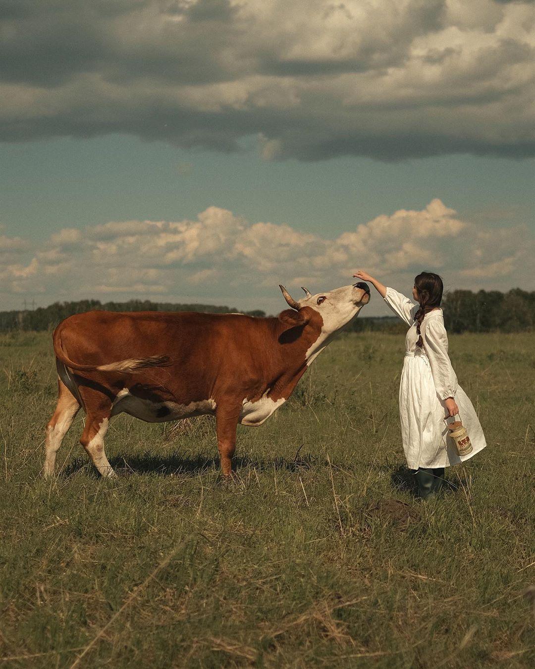 cô gái với phong cách thời trang cottagecore chơi với bò giữa thảo nguyên