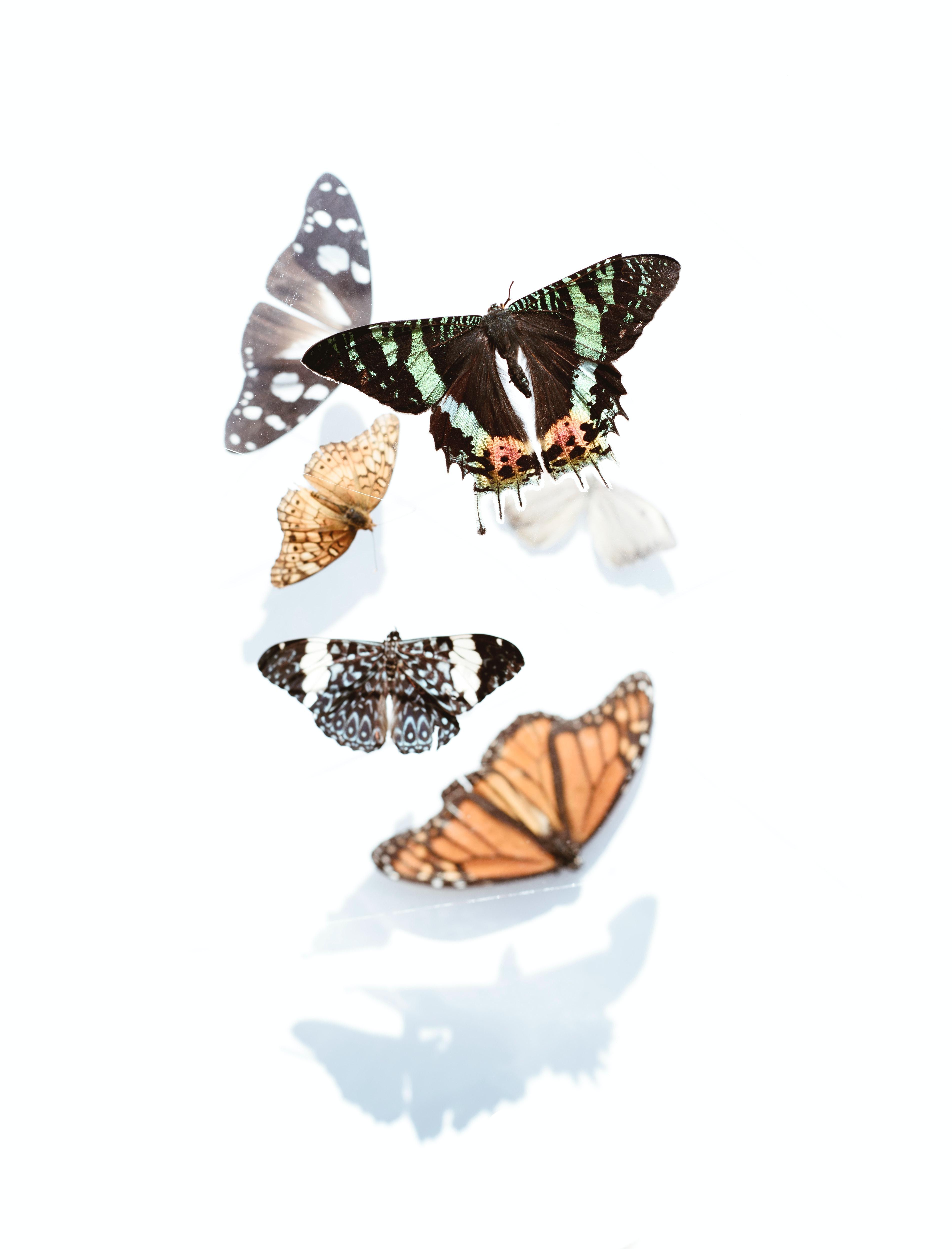 cảm giác bồn chồn khi yêu hiệu ứng cánh bướm