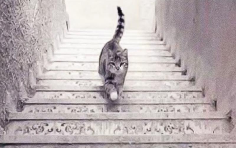 trắc nghiệm hình ảnh con mèo
