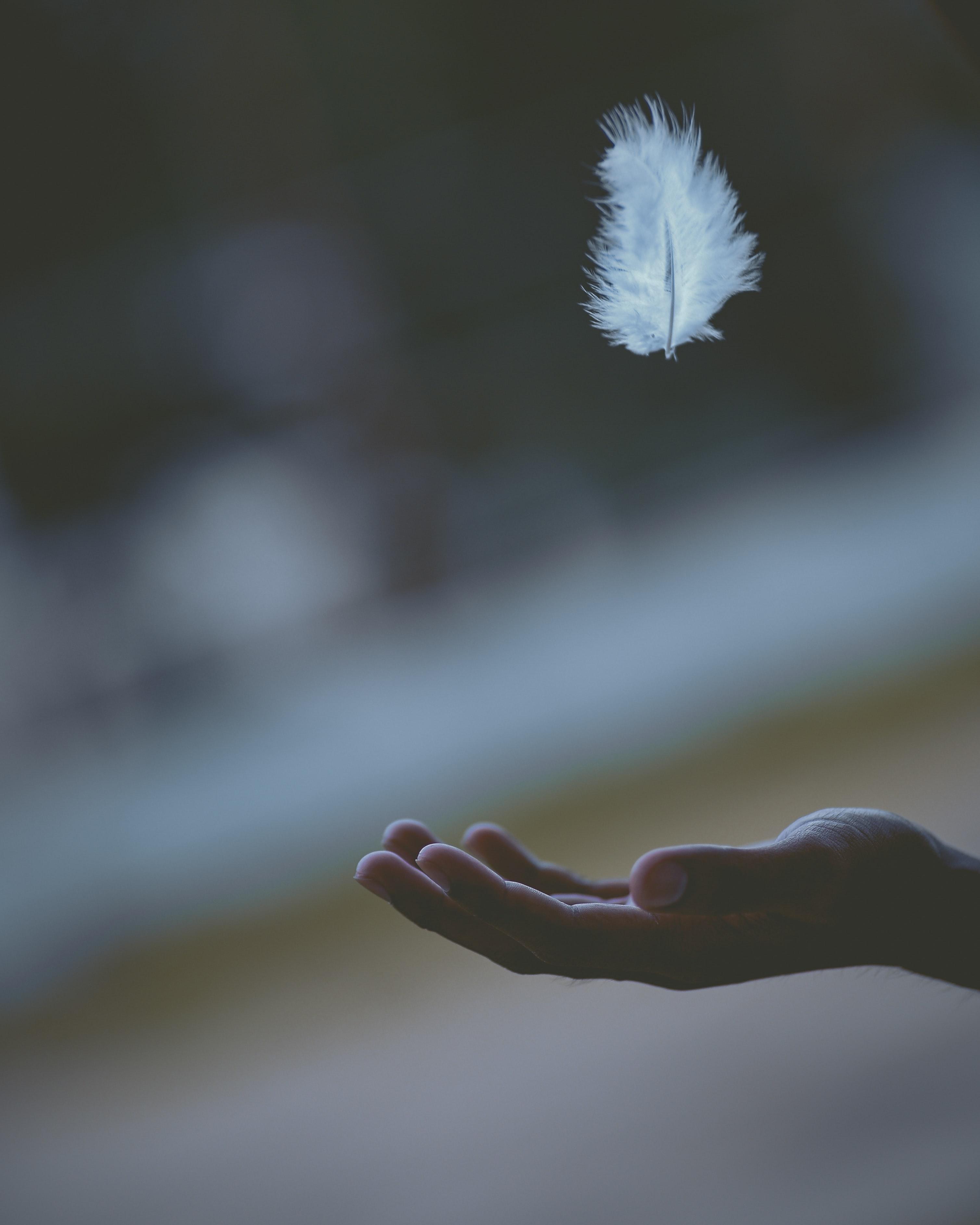 hướng dẫn tâm linh lông vũ trắng