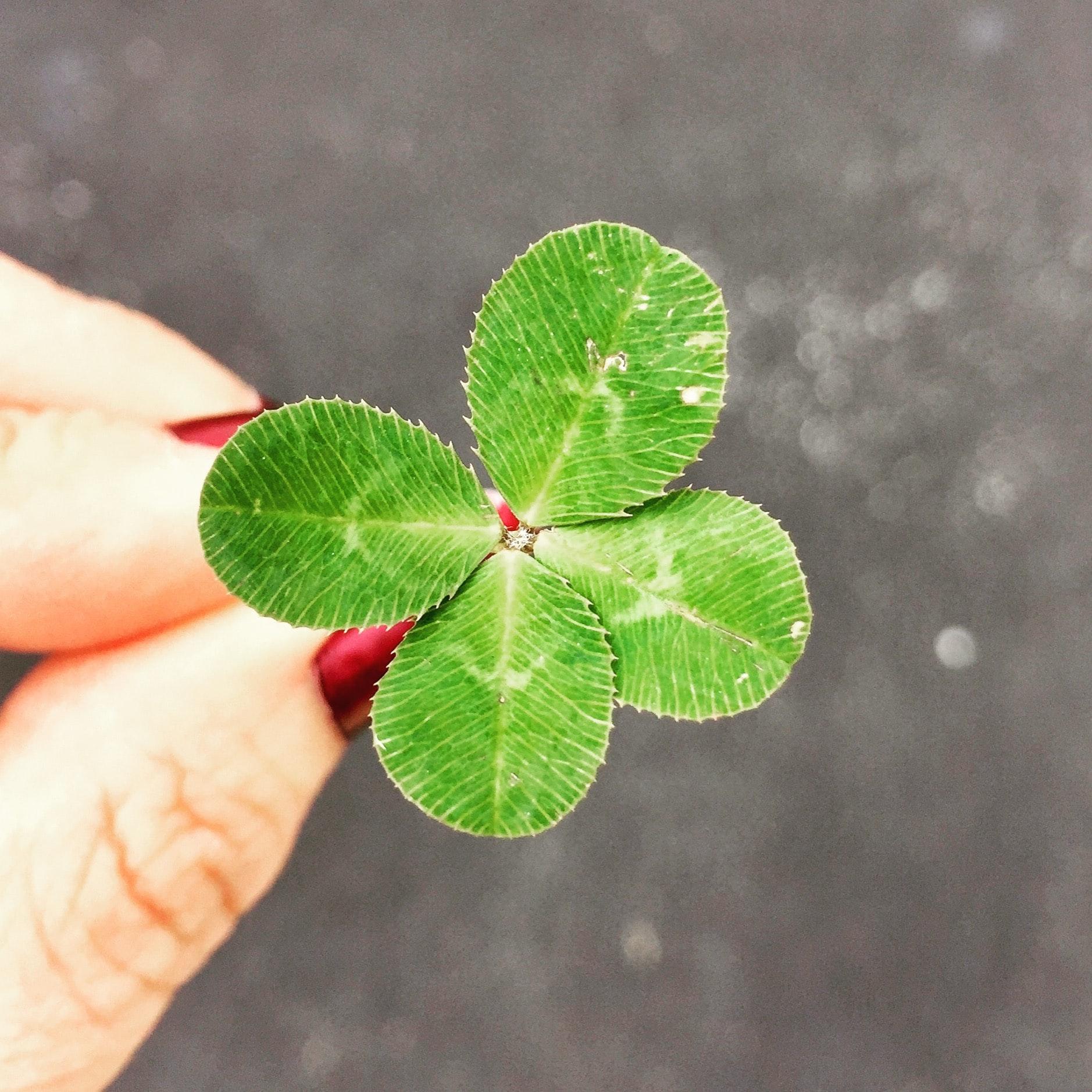 thiên thực người may mắn