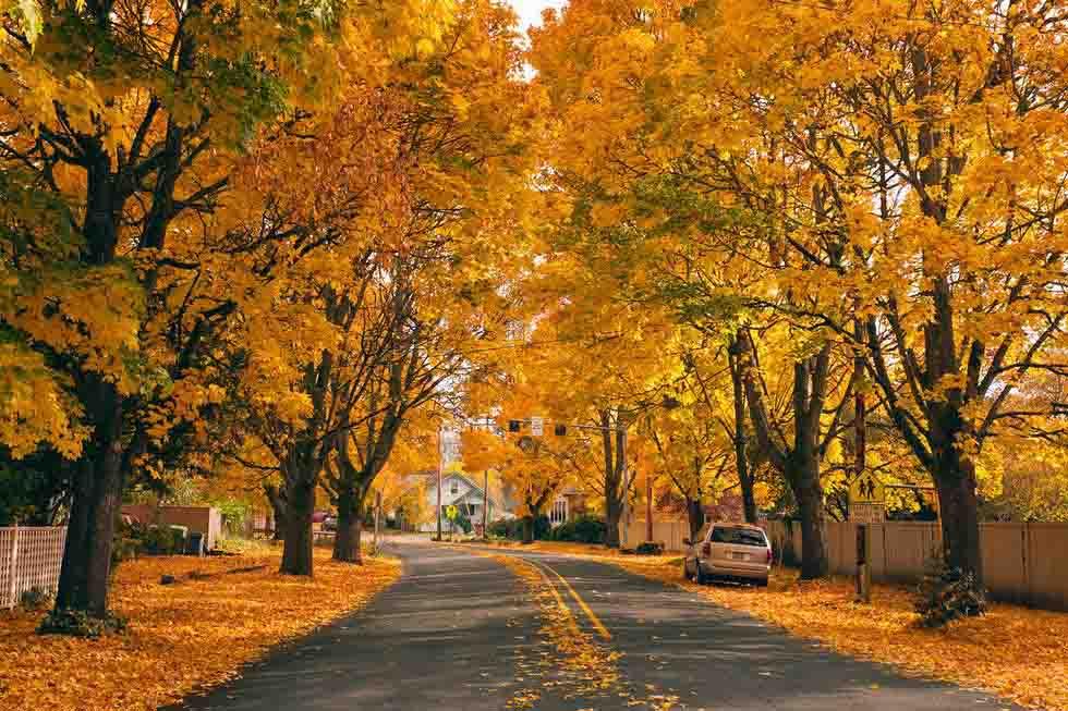 con đường mùa thu