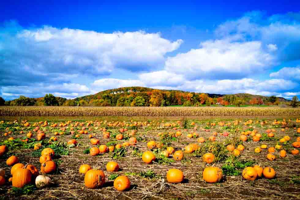 mùa thu bí ngô