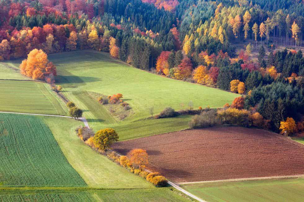 mùa thu cánh đồng xanh