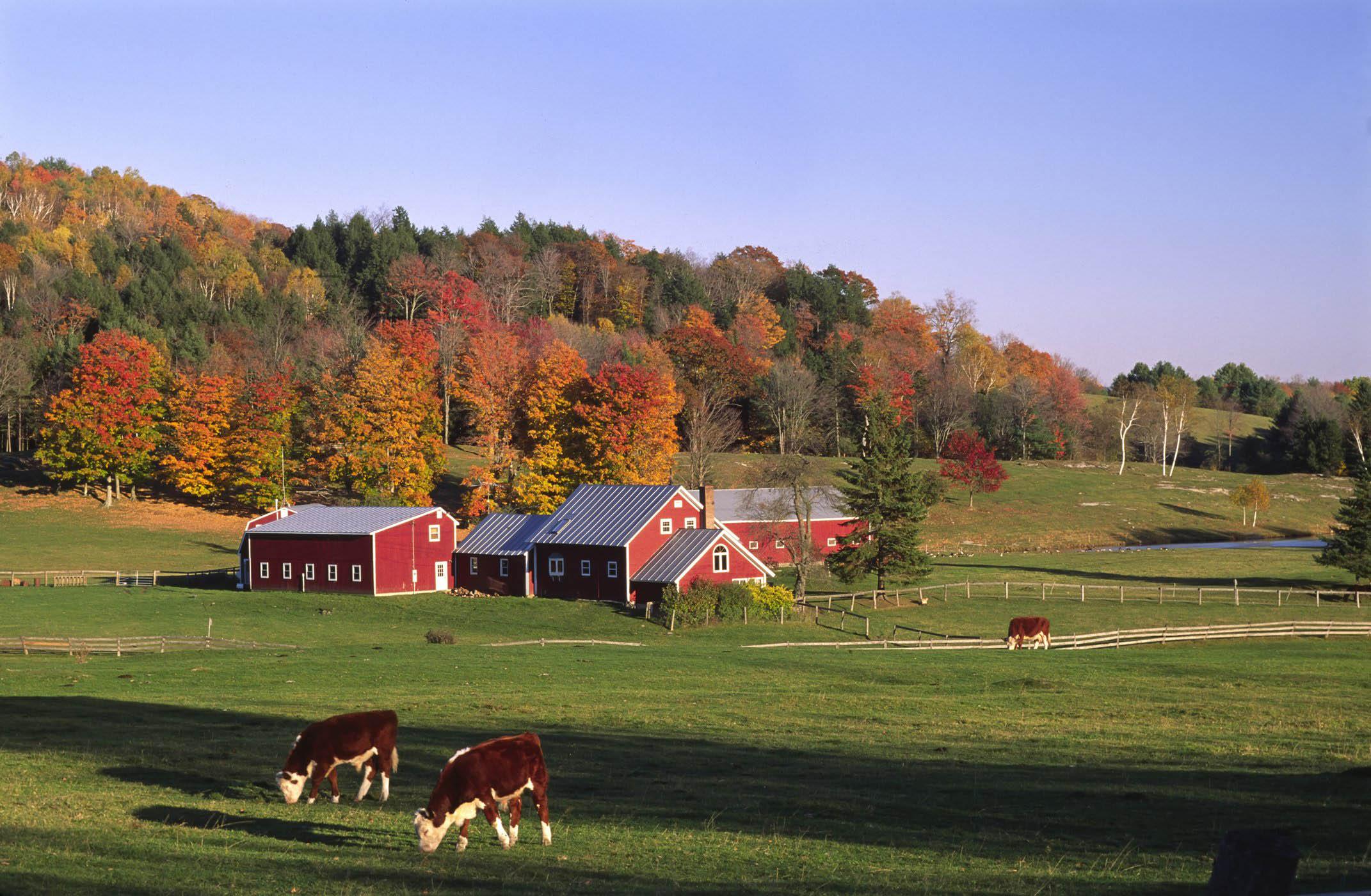 mùa thu cánh đồng