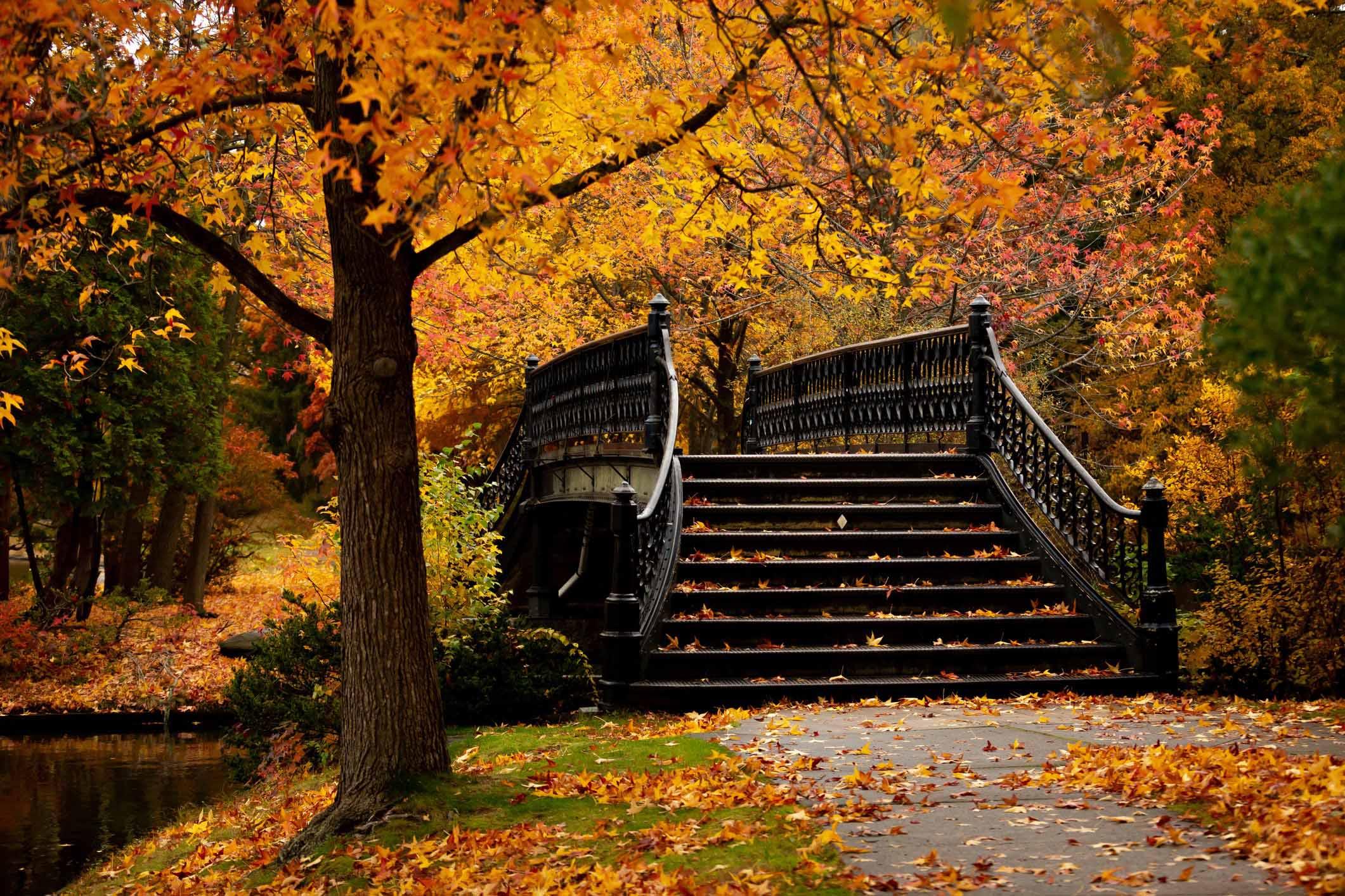 mùa thu cây cầu
