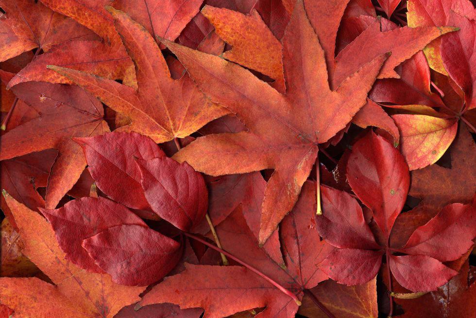 mùa thu chiếc lá